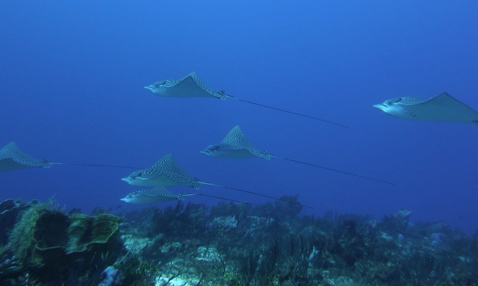 Cozumel Dive Center